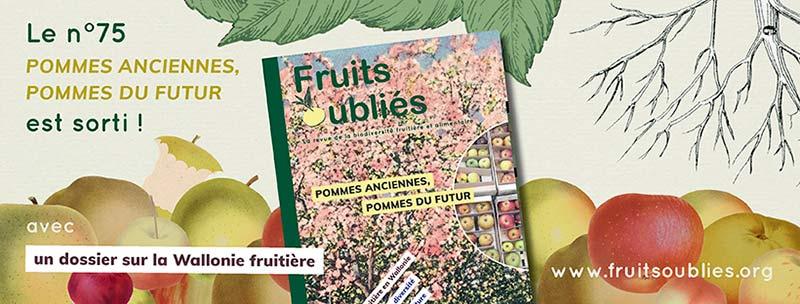 pommes anciennes pommes du futur