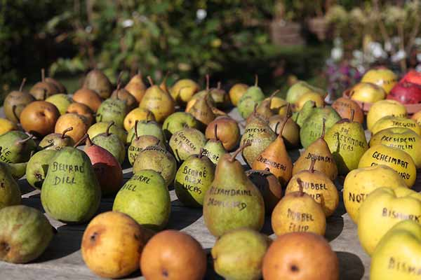 variete-fruits-Alexandre-Dulaunoy