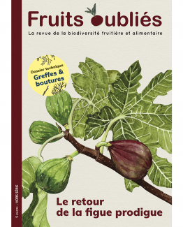 revue fruits oublies figue